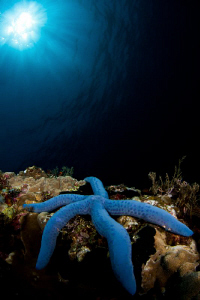 blue sea star with tokina 10-17 + ZEN minidome by Paolo Isgro